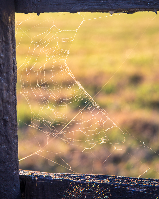 A wicked web we weave